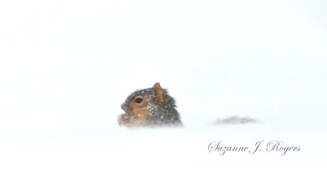 Cute squirrel in the snow 5602     2014