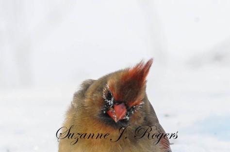 Watermark Bird makeup 2 (1 of 1)