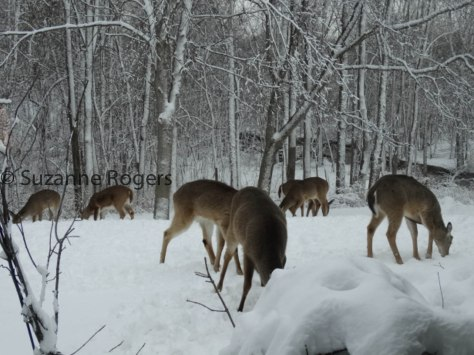 THE HERD OF THE RELENTLESS LATE WINTER 2014 (1 of 1)