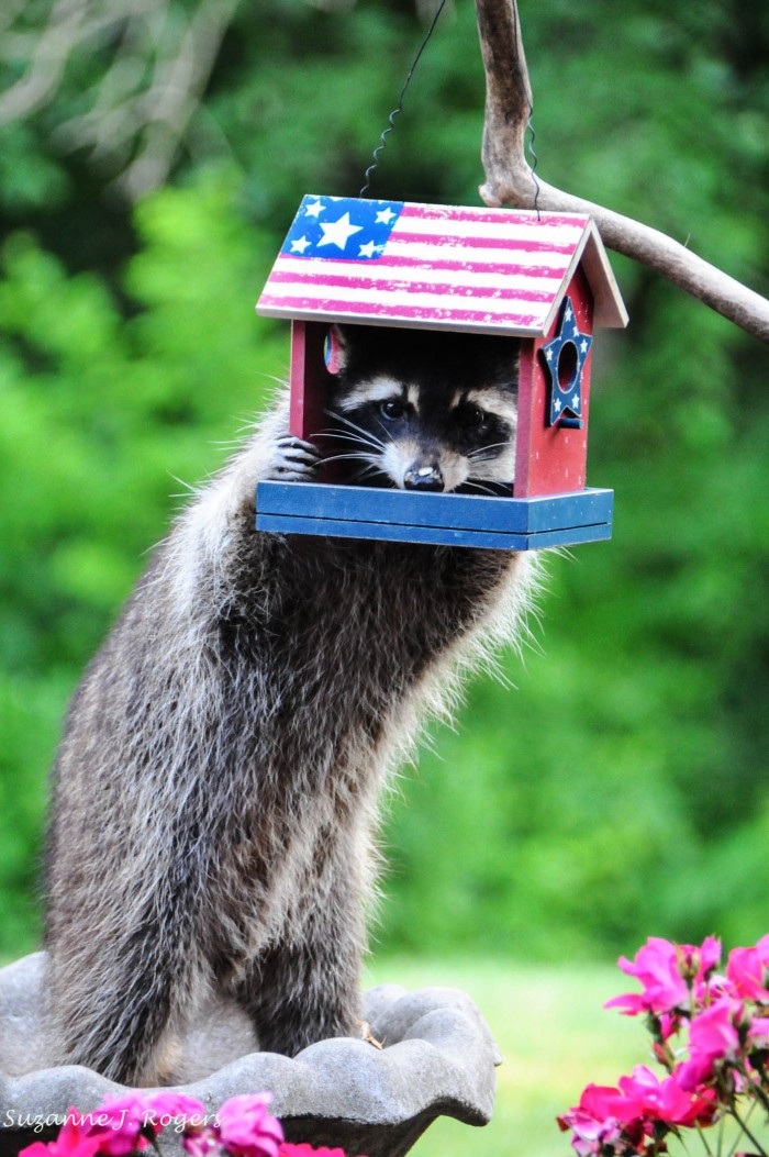 """HAPPY 4TH ZANNYRO! I JUST STOPPED BY TO GRAB A SNACK…DO YOU HAVE ANY HOT DOGS, MAYBE SOME CHIPS, ANGEL FOOD CAKE?"""