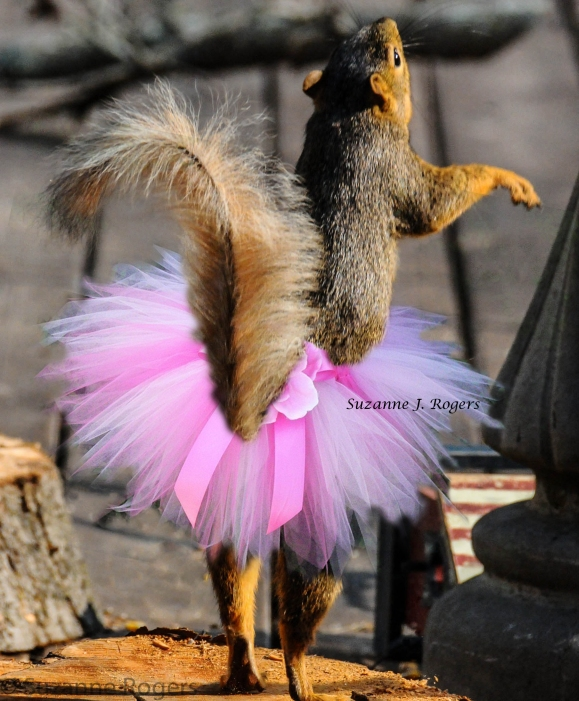 watermarked twice ballerina squirrel