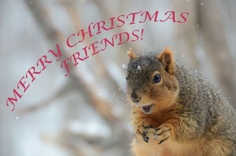 2443 MERRY CHRISTMAS FRIENDS