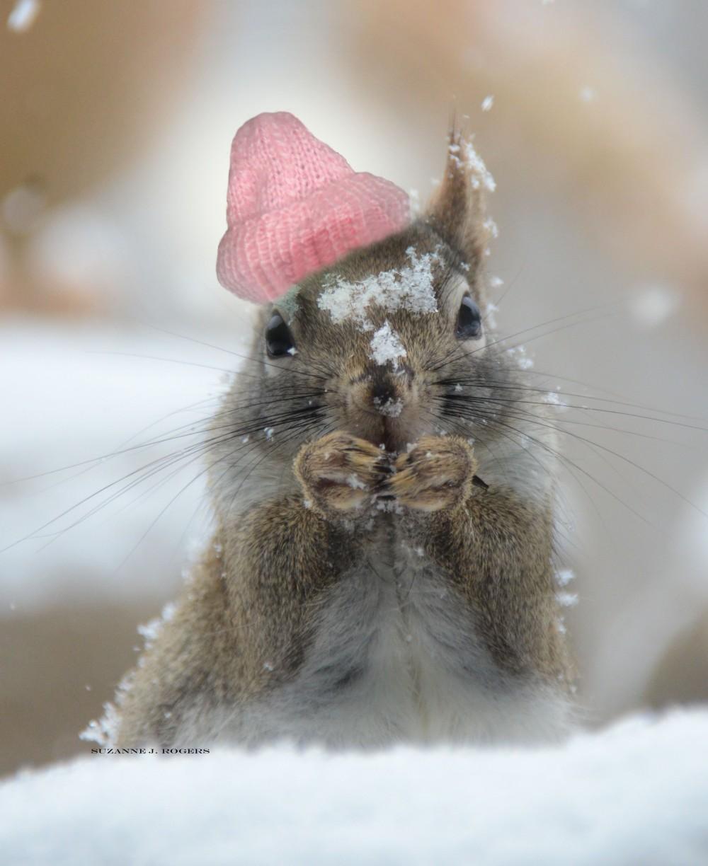 DSC_4494 squirrel with pink hat