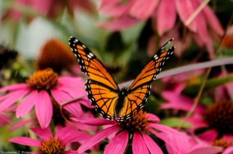 4514-ill-miss-the-butterflies-39-of-1