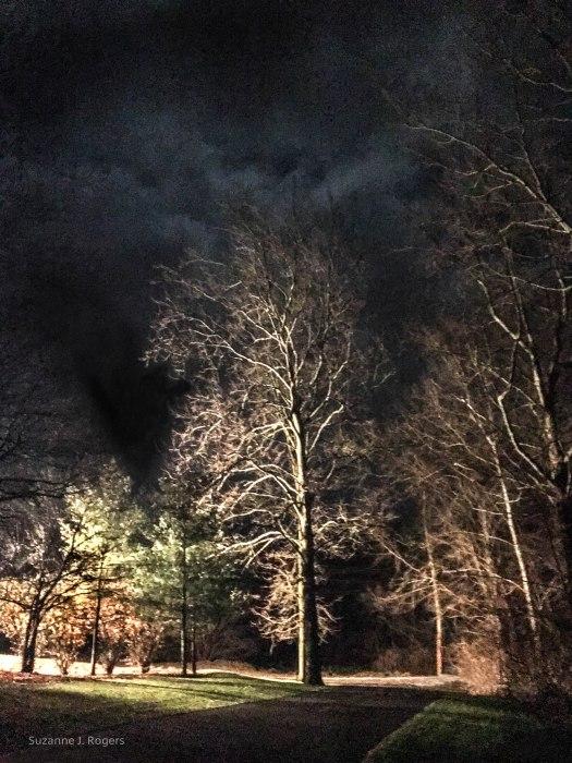 0228-lit-up-tree-wm