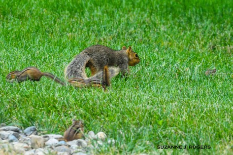 0631-i-see-you-over-there-hiding-in-the-grass