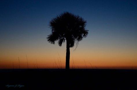 Deep Shadows Palm WM