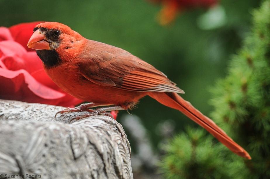 3743 Cardinal WM (39 of 1)