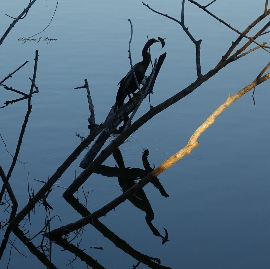 bird with fish 2 wm
