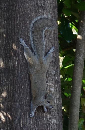 Curious squirrel 1