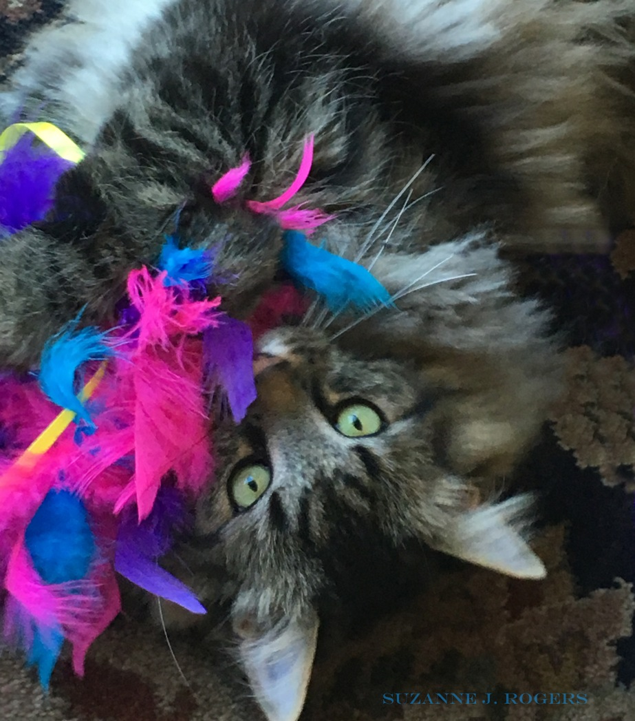 Oliver and the feather boa WM