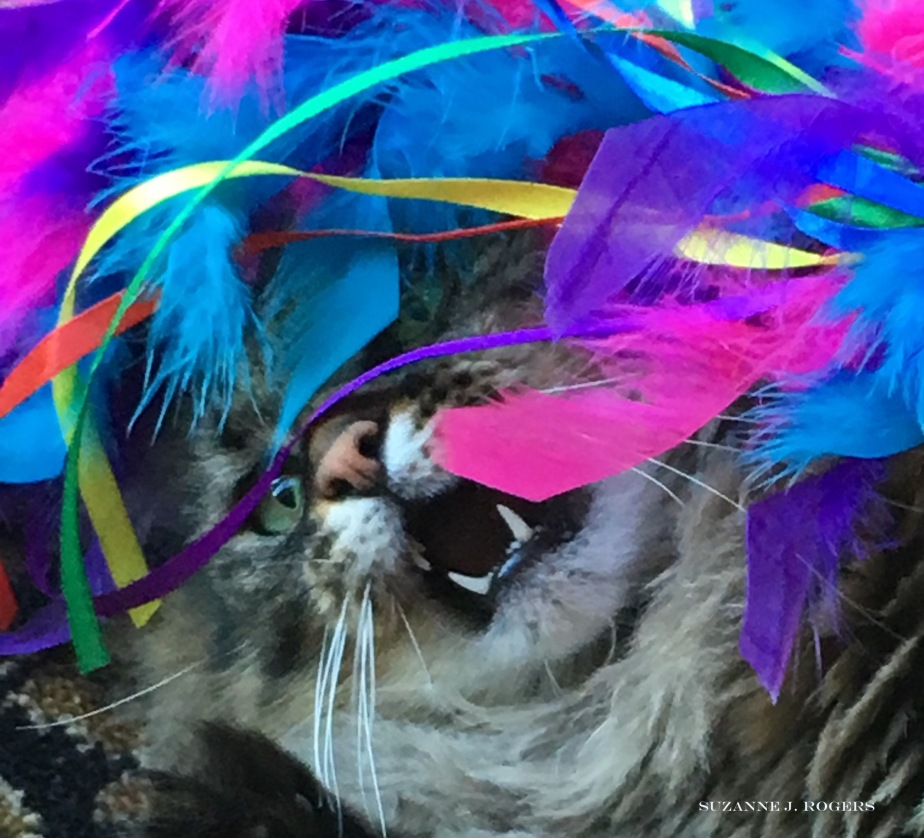 Ollie feather frenzy 1