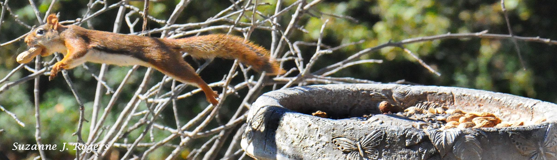 WM Super Squirrel