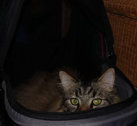 Ollie hiding