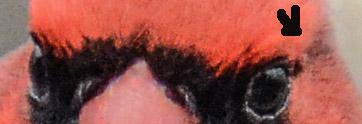 Eyes and Arrow