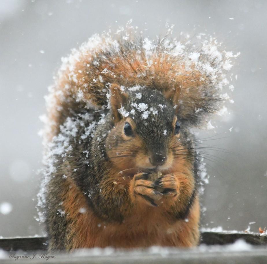 DSC_1319 2 WM Snowy fur