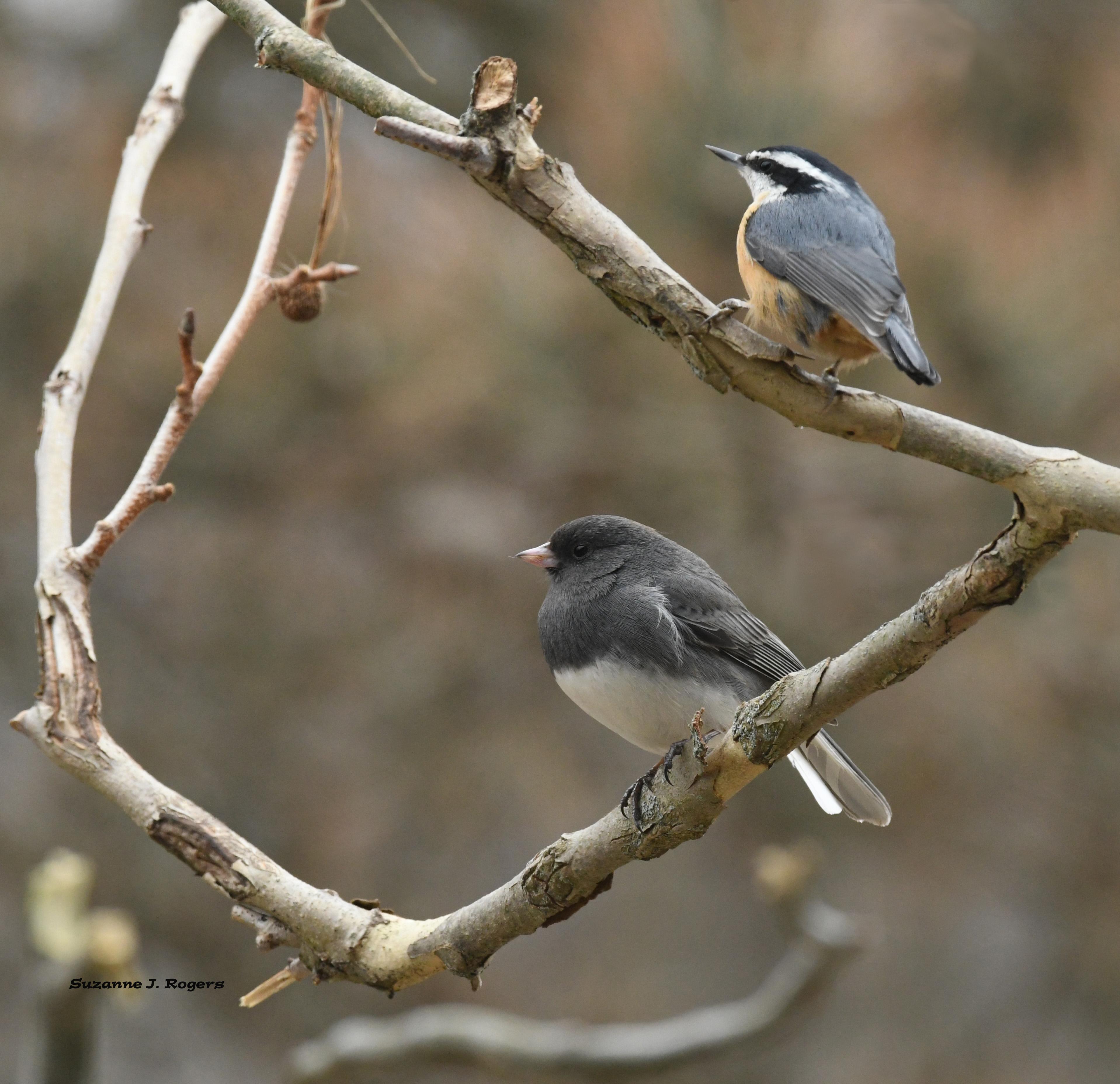 DSC_4510 Two birds