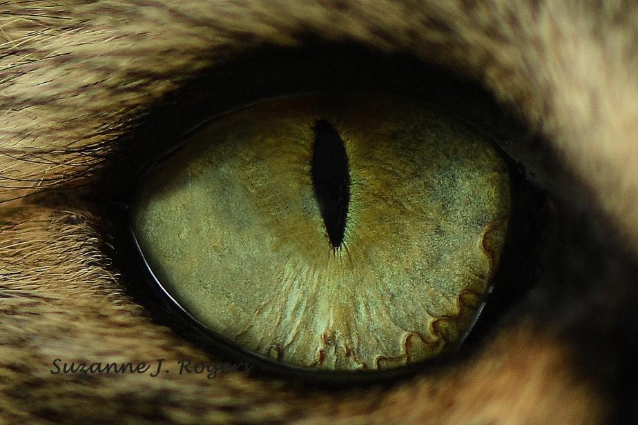 5814 use this 2 wm Ollies eye (39 of 1)_edited-1