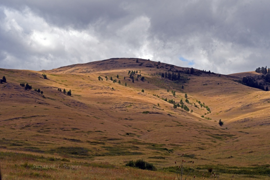 DSC_3936 National Bison Range wm_edited-1
