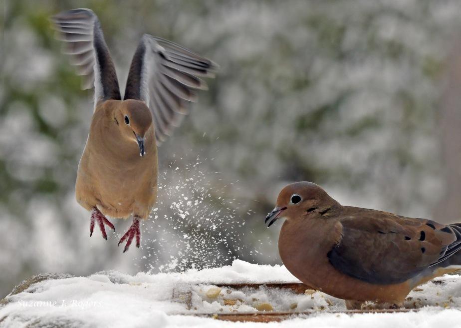 The Dove Jump wm DSC_5830