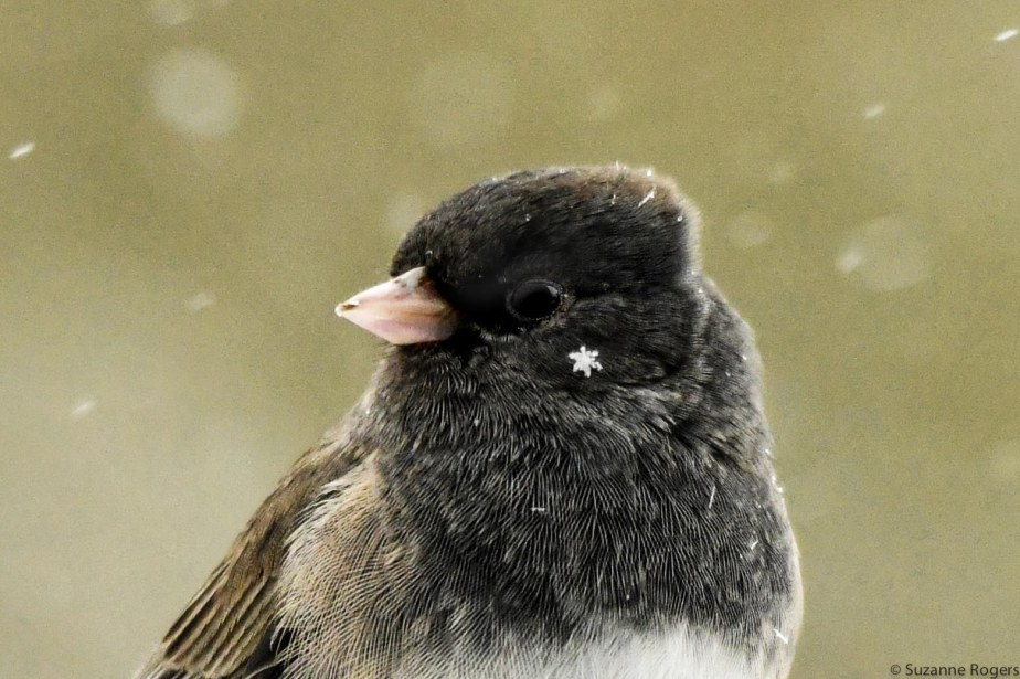 use this Junco with snowflake wm