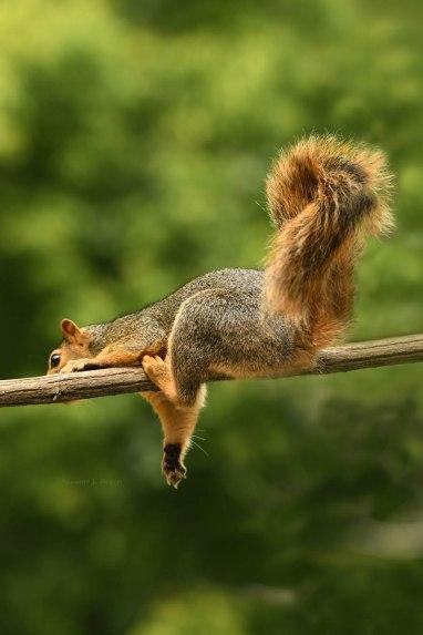 Squirrel hanging around wm